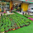 گلفروشی سفیرسبز در بهبهان شیراز