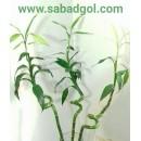 نکاتی برای نگهداری بامبو