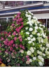گل آرایی نمایشگاه